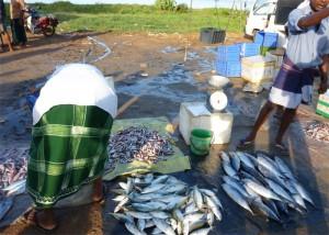 Kingdom Ayurveda Resort - Mercato del pesce, Matara - Sri Lanka