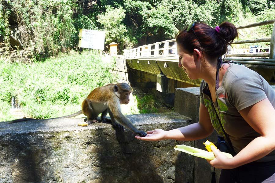 kingdom-ayurveda-resort-parchi-naturali-sri-lanka