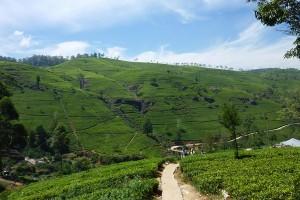 Kingdom Ayurveda Resort - Verdeggianti montagne, Sri Lanka